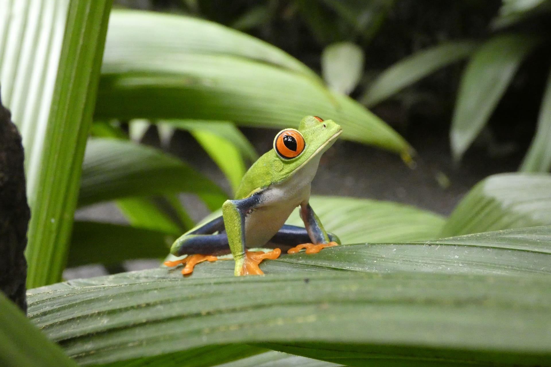Bandeau Costa Rica