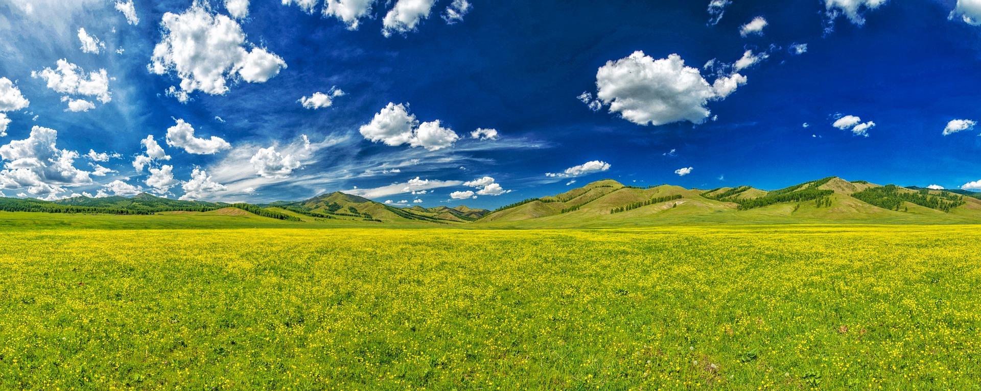 Bandeau Mongolie