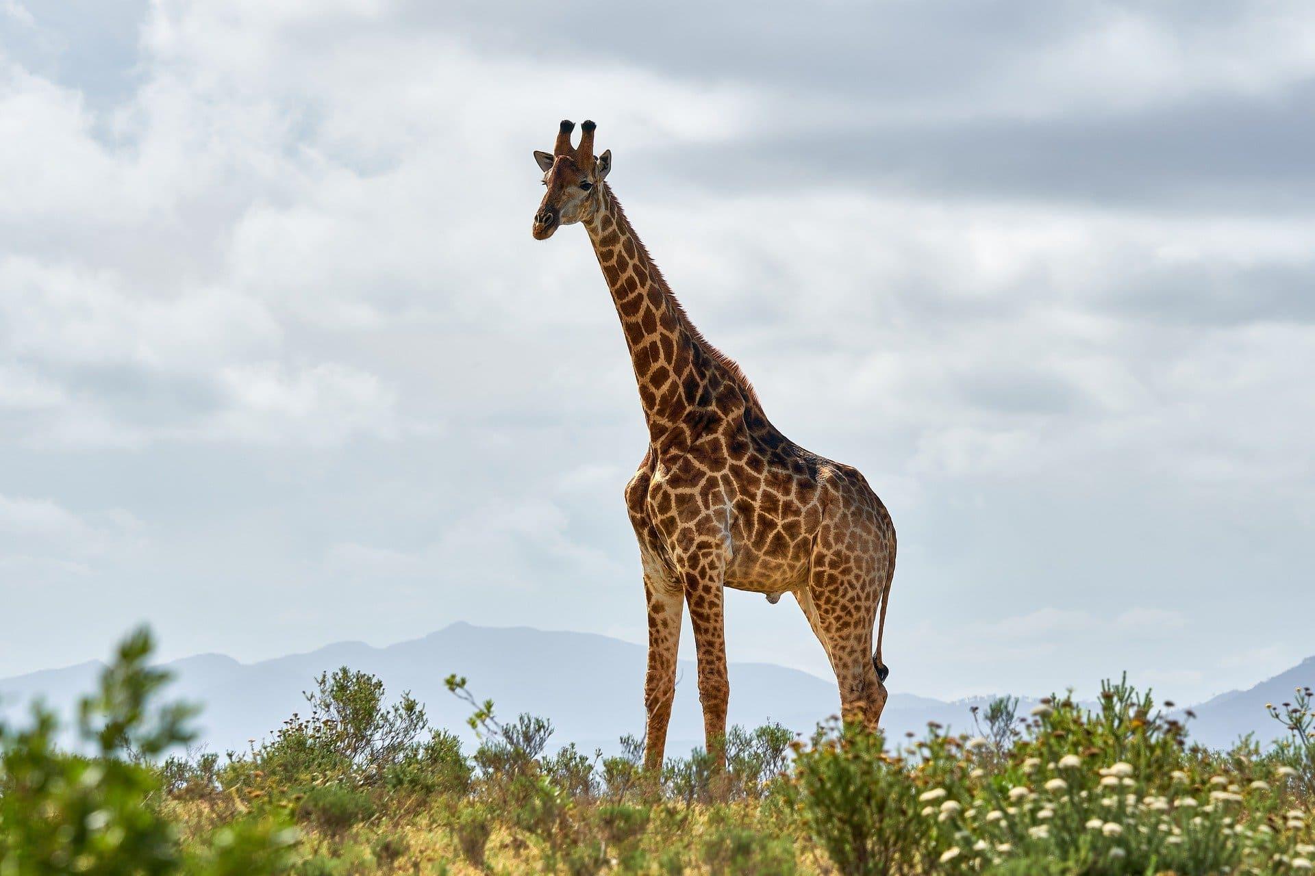 Bandeau Afrique du Sud