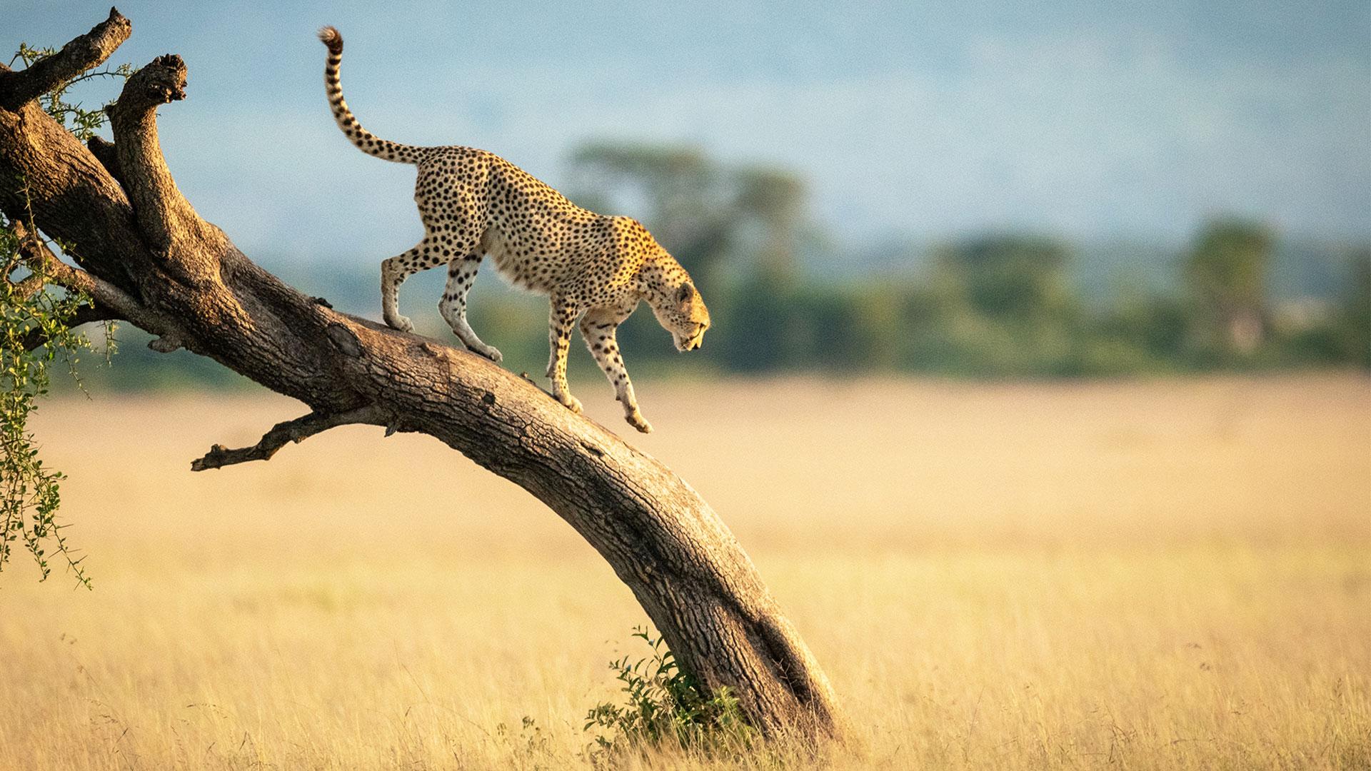 Bandeau Tanzanie
