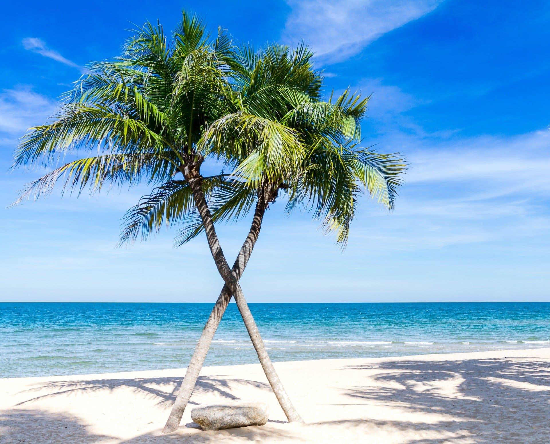 Bandeau Martinique
